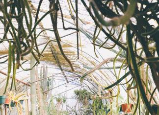 Doniczki na kwiaty i zioła – rodzaje